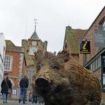 wild-boar-in-lion-street