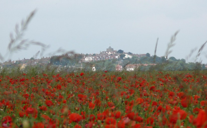 The Poppy fields of Rye