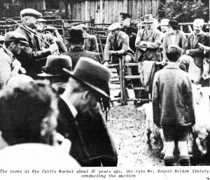 Ernest Holden Stutley Auctioneering at Rye Cattle Market