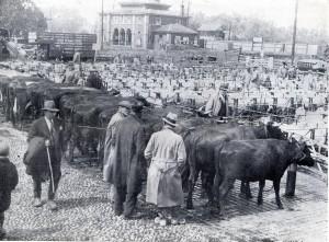 Rye Cattle Market Prewar 1937