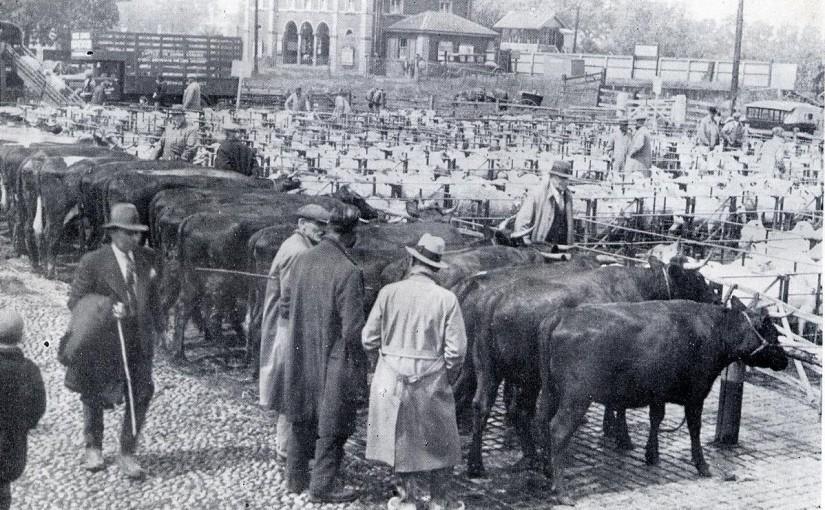 Rye Cattle Market 1937