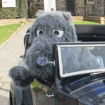 Wild Boar in Car at Ypres Castle Inn