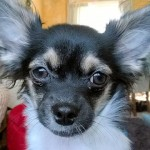 20161221-tobias-dog-stolen-chichester-sxp201612190854-ls